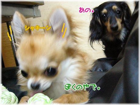 2008-06-08-13.jpg