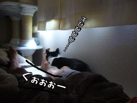 P1110690.jpg