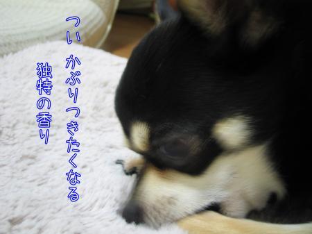 ものまね犬3