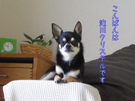 ものまね犬1