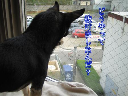 出窓でヒヤッとニンマリ6