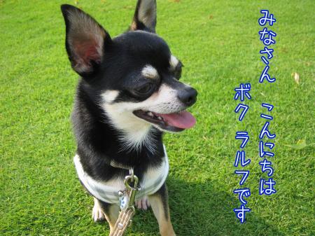 うなずき犬1