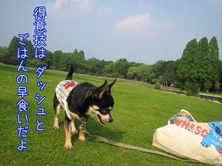 うなずき犬2