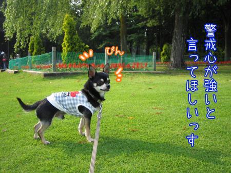 うなずき犬3