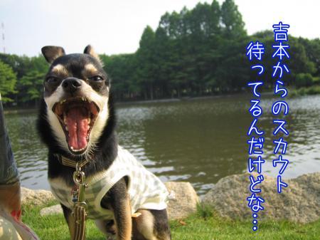 うなずき犬4