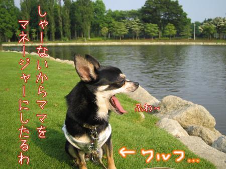 うなずき犬5