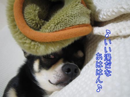 愛犬の野生度は?4
