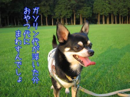 エコな散歩5