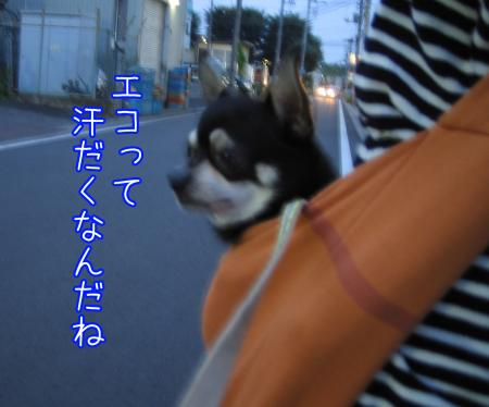 エコな散歩6