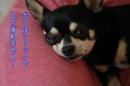 バリカン犬1