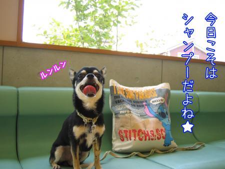 バリカン犬2