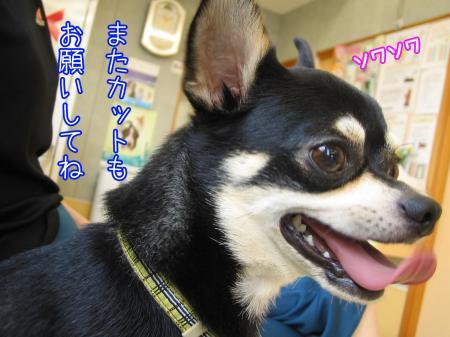 バリカン犬3