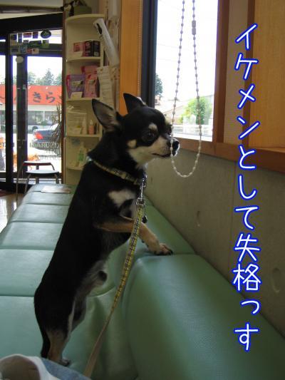 バリカン犬5