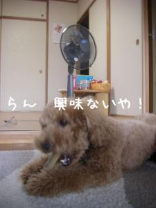 せんぷうき6