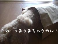 かいもの4