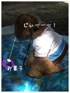 CIMG3133.jpg