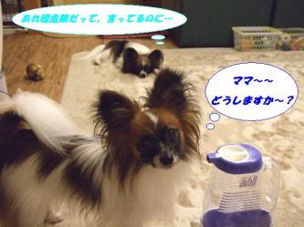 04-06_20080709150745.jpg