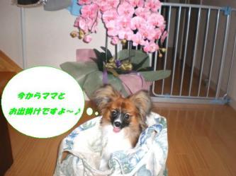 08-01_20080712090654.jpg
