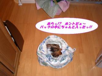 08-03_20080712090716.jpg