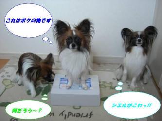 21-01_20080721140127.jpg