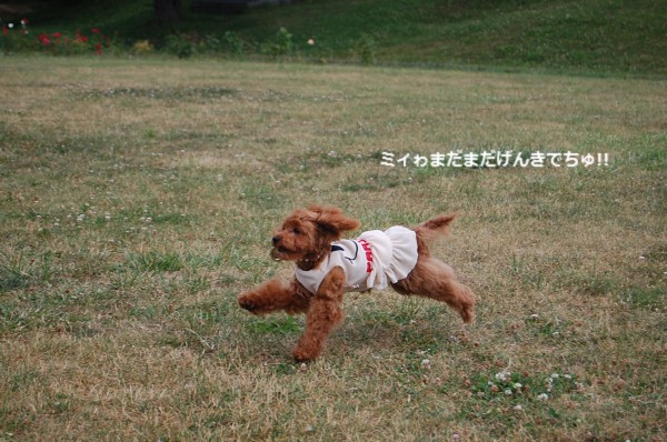 7.4 中島公園!! ミルフィー?