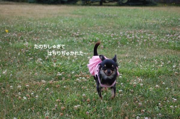 7.4 中島公園!! 羅凛?