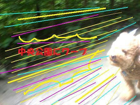 CIMG0075_20080710230431.jpg