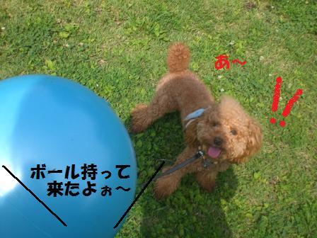 CIMG0107.jpg