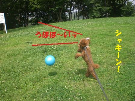 CIMG0112_20080711232153.jpg