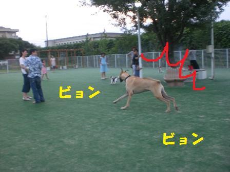 CIMG0588.jpg
