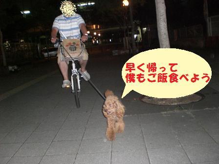 CIMG0834_20080801224635.jpg
