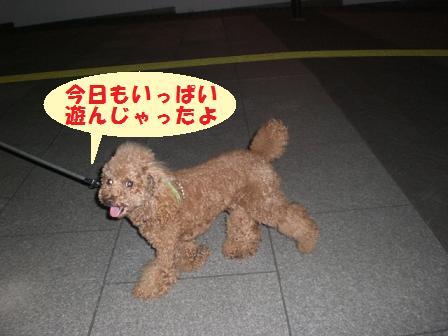CIMG0841_20080801224658.jpg