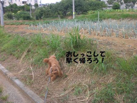 CIMG0854_20080802223602.jpg