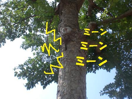 CIMG0864_20080803213304.jpg