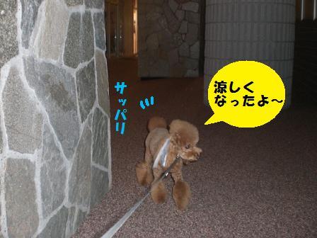 CIMG0881_20080804201948.jpg