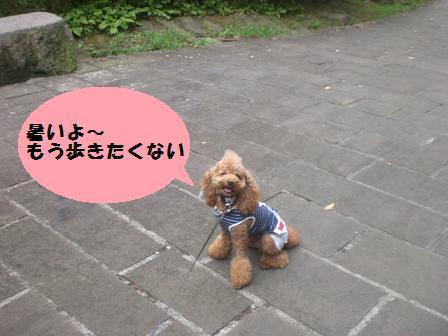 CIMG1089_20080809220424.jpg