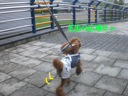 CIMG1094_20080809220429.jpg