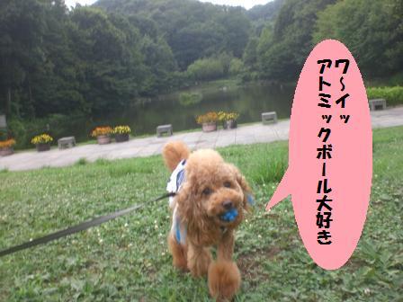CIMG1100_20080809220446.jpg
