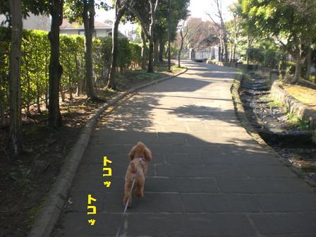 CIMG5241.jpg
