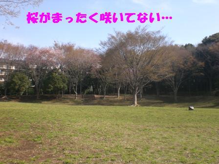 CIMG5391.jpg