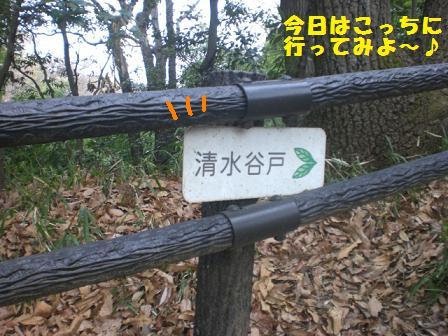 CIMG5433.jpg