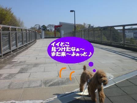 CIMG5687.jpg