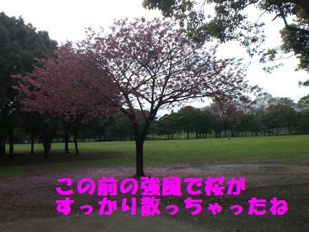 CIMG5802.jpg