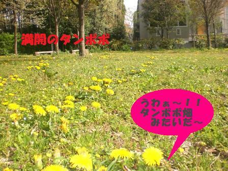 CIMG6108.jpg
