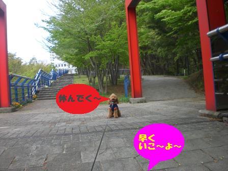 CIMG6245.jpg