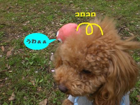 CIMG6292.jpg