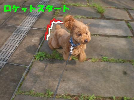 CIMG6643.jpg