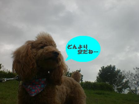 CIMG6770.jpg
