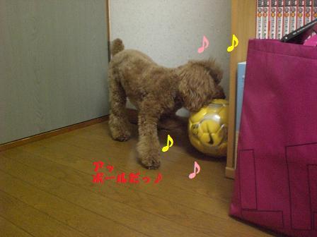 CIMG6794.jpg