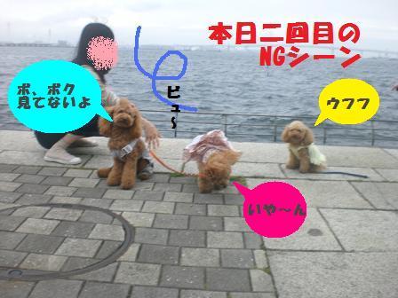 CIMG6981.jpg